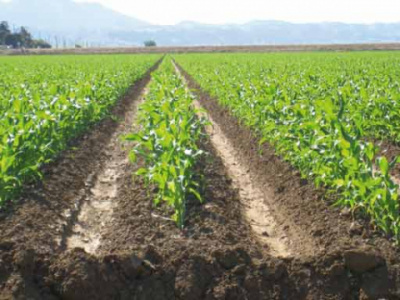 togo-waemu-has-in-the-past-25-years-invested-more-than-cfa6-billion-in-agriculture