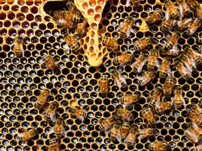 un-marche-de-plus-de-450-millions-de-consommateurs-europeens-s-ouvre-au-miel-togolais