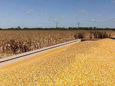 togo-une-production-cerealiere-attendue-a-1-4-millions-de-tonnes-sur-fond-de-hausse