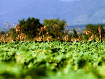 togo-comment-inciter-plus-de-jeunes-a-entrer-dans-l-agro-business-pour-une-production-plus-performante-et-technologique