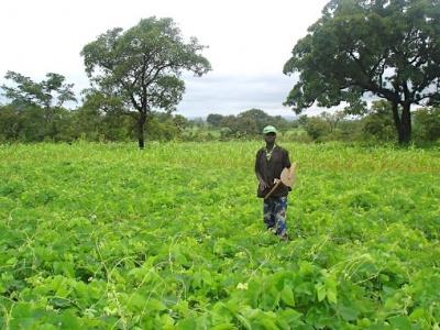 togo-un-recensement-des-terres-agricoles-va-etre-lance