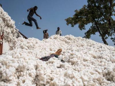 togo-les-cotonculteurs-se-remobilisent-autour-de-l-objectif-200-000-t-a-l-horizon-2022