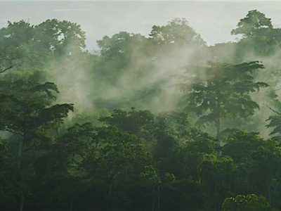 redd-commits-to-helping-togo-boost-its-forest-cover
