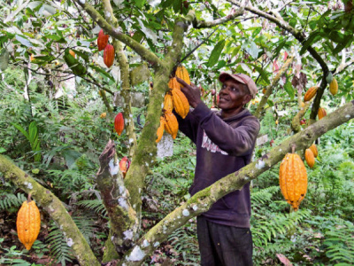 french-agricultural-research-centre-cirad-wants-to-restart-cooperation-with-togo