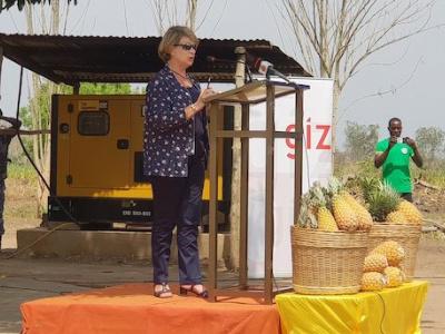 togo-un-coup-de-pouce-de-l-ue-et-de-la-cooperation-allemande-pour-la-filiere-de-l-ananas