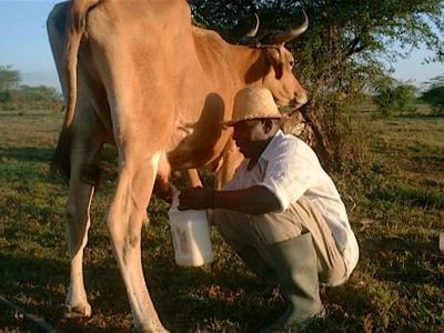 le-togo-envisage-d-ouvrir-d-ici-septembre-2019-une-ferme-ecole-pour-monter-sa-propre-industrie-laitiere