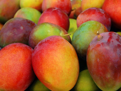 togo-an-agricultural-cooperative-sells-30-tons-of-mangoes-to-ghanaian-firm-hpw-with-mifa-s-help
