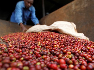 togo-les-recettes-des-exportations-agricoles-en-2019