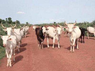 ecowas-araa-to-inject-3mln-in-innovative-projects-aimed-at-bolstering-husbandry-and-livestock-trading