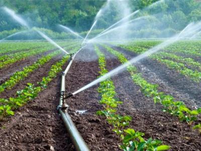 togo-les-filieres-soja-sesame-et-ananas-plus-grosses-pourvoyeuses-d-emplois-dans-le-domaine-agricole-en-2019