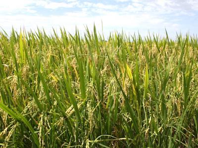 le-mecanisme-incitatif-de-financement-agricole-mifa-passe-a-la-vitesse-superieure