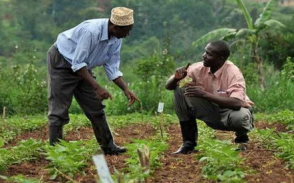 Kara Agropole Project : Various key actors are being trained to help boost the capacities of farmers