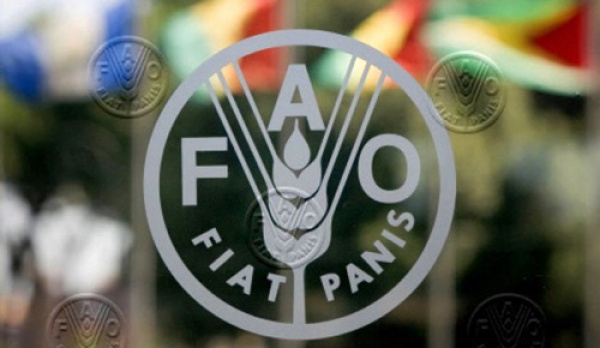FAO boosts food security in Northern Togo