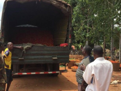 government-purchases-tomato-stock-from-local-farmers-as-nigeria-closes-border-with-benin