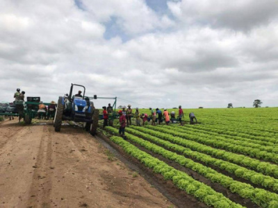 togo-s-govt-plans-ppps-to-develop-agricultural-processing-areas