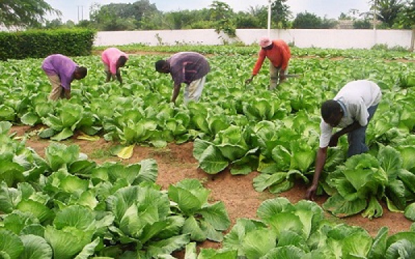 AfDB, Togo discuss ways to improve SME/SMIs' access to agricultural loans