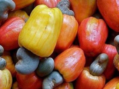 la-cedeao-veut-certifier-en-priorite-cinq-produits-dont-la-noix-de-cajou-et-le-ciment