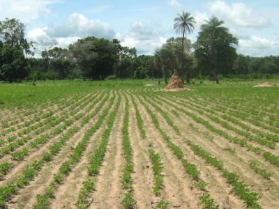 au-togo-les-chambres-regionales-d-agriculture-connaissent-une-mutation