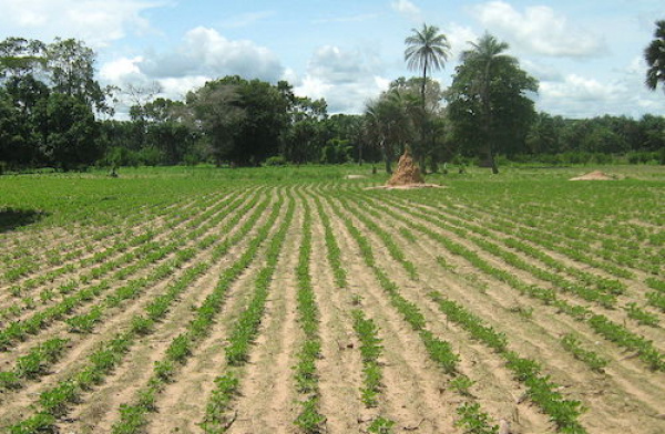 Togo: Regional chambers of agriculture amended