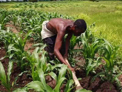 in-togo-agriculture-is-still-highly-under-financed-by-banks