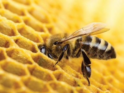 backed-by-the-world-bank-togo-will-spend-cfa500-million-to-develop-its-beekeeping-industry-in-2019