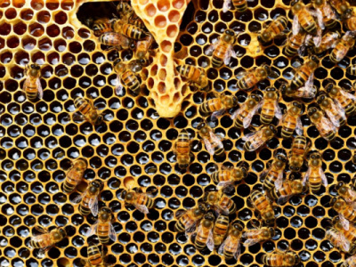 togo-gets-approval-to-export-its-honey-to-the-eu