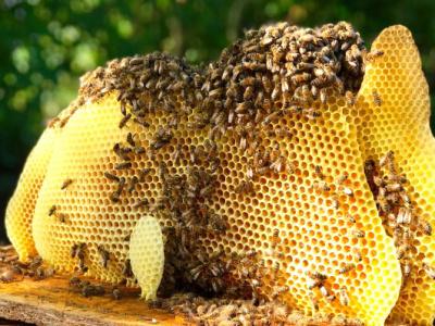 le-togo-va-exporter-aux-etats-unis-au-moins-3-5-tonnes-de-cire-d-abeilles-par-an-et-sur-4-ans