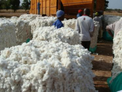 cotton-togo-should-produce-152-000-tons-this-campaign-according-to-the-usda