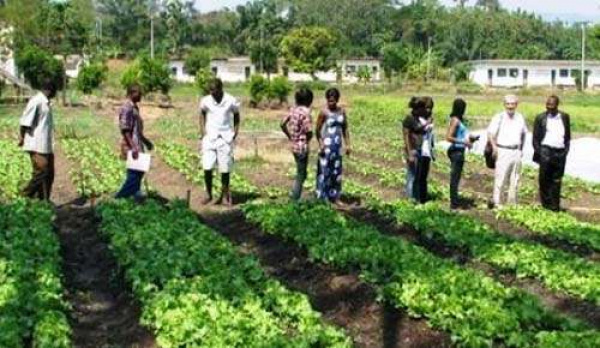 Togo : Public authorities decide to restructure the national school of agriculture of Tové
