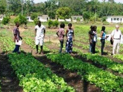 togo-public-authorities-decide-to-restructure-the-national-school-of-agriculture-of-tove