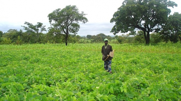 Togo: Government to carry out land census in order to valorize local arable lands