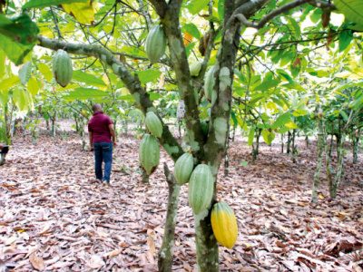 the-pasa-and-its-impact-on-the-coffee-and-cocoa-sectors