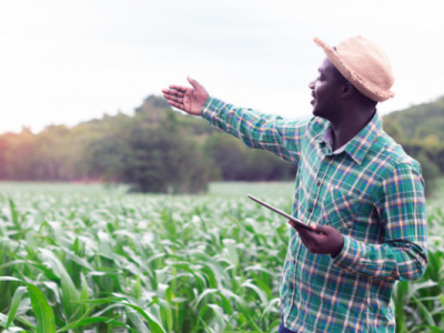 government-to-undertake-massive-investment-in-the-agricultural-sector