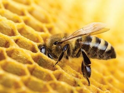 appuye-par-la-banque-mondiale-le-togo-va-allouer-500-millions-fcfa-a-la-promotion-de-l-apiculture-en-2019