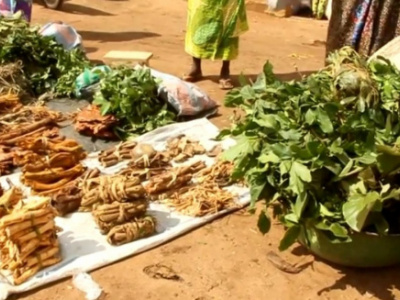 togo-traditional-medicine-may-soon-be-taught-in-universities