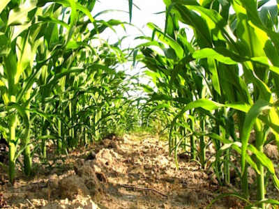 2018-19-agricultural-season-volumes-of-subsidized-input-rise-by-53-to-46-000-tons