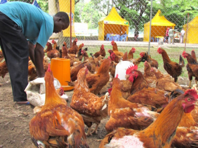 animal-production-paiej-sp-seeks-400-young-entrepreneurs-to-develop-projects-in-the-kara-and-the-savannas-regions