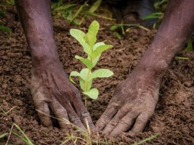 togo-la-banque-panafricaine-ecobank-s-investit-dans-l-environnement