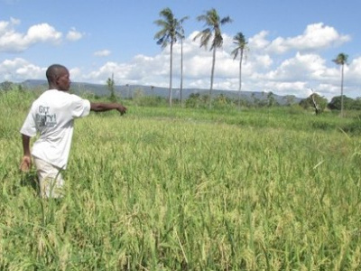 togo-fao-supports-forest-and-farm-producers-with-more-than-xof88-million-under-its-forest-and-farm-facility