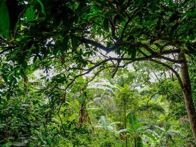 la-fao-veut-recruter-une-equipe-de-consultants-pour-la-restauration-des-paysages-forestiers