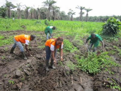 togo-a-forum-for-agricultural-businesses-will-be-held-on-jan-21-22