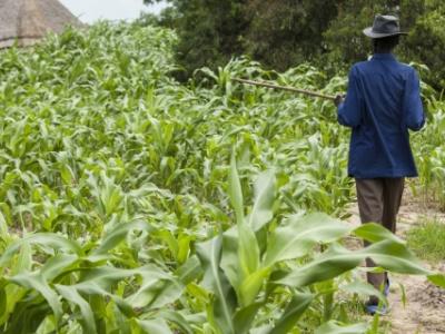 togo-les-operateurs-economiques-encourages-a-investir-dans-le-secteur-agricole