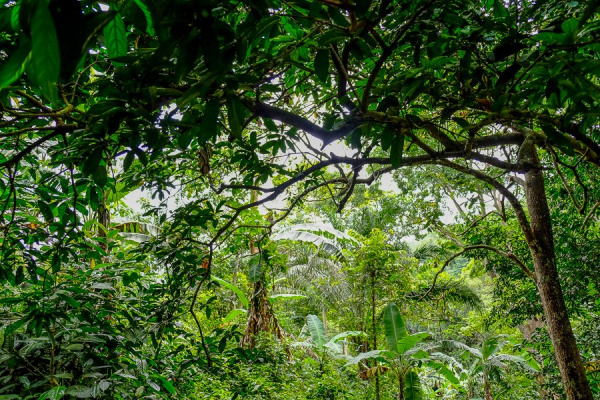 fao-seeks-local-experts-to-restore-forest-landscapes-in-togo