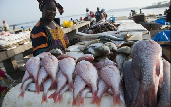 Combined fish output in 2018 and 2019 exceeded 37,000 tons in Togo