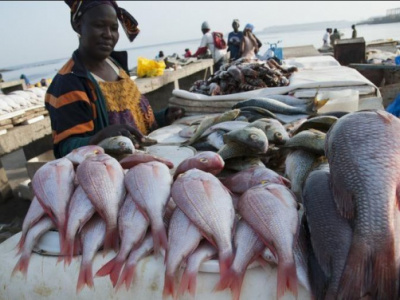 combined-fish-output-in-2018-and-2019-exceeded-37-000-tons-in-togo