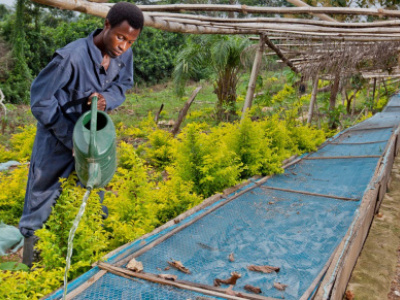 togo-to-build-irrigation-systems-and-superstructures-in-50-agricultural-zones