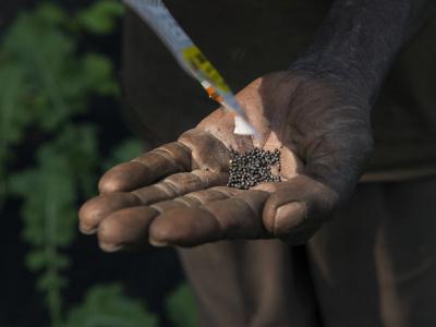 togo-lancement-d-un-projet-visant-a-garantir-les-droits-des-auteurs-des-decouvertes-ou-creations-d-especes-de-plante