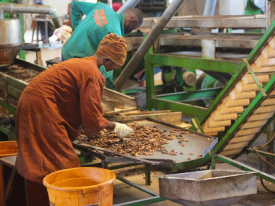 mifa-injects-over-cfa500-million-in-a-local-cashew-producer
