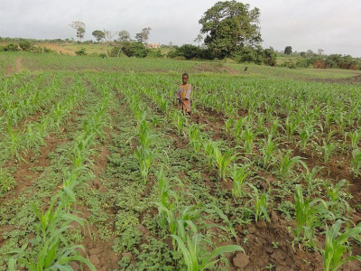 an-overview-of-agriculture-in-togo-present-and-future