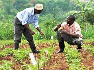 le-paeij-sp-amorce-la-transition-de-2-300-groupements-de-producteurs-vers-des-societes-cooperatives